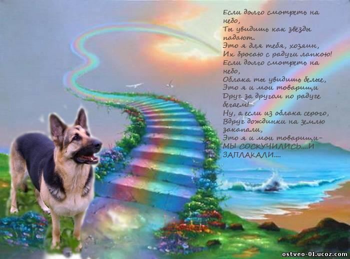 Стих ушла собака